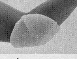 Reston Self Adhering Foam Pads And Rolls